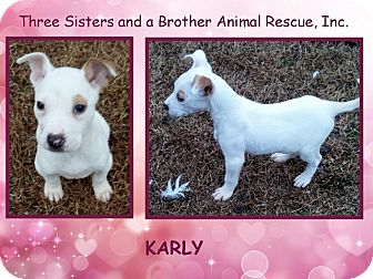 Fox Terrier (Smooth)/Terrier (Unknown Type, Small) Mix Puppy for adoption in Dallas, North Carolina - KARLY
