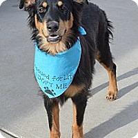 Adopt A Pet :: Manny - Aurora, CO