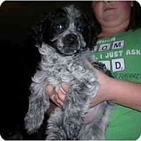 Adopt A Pet :: Chester - Glastonbury, CT