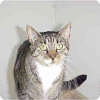 Adopt A Pet :: Tammy - Quincy, MA