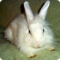 Adopt A Pet :: Mae Mobily - Santee, CA
