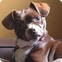 Adopt A Pet :: Elise - Homewood, AL