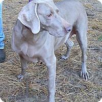 Adopt A Pet :: Sophie - Grand Haven, MI