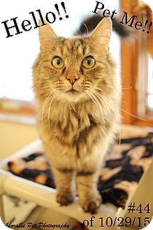 Domestic Longhair Cat for adoption in Gaylord, Michigan - 44 of 10-29-15
