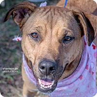 Adopt A Pet :: Mary - Gainesville, FL