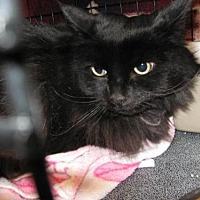 Adopt A Pet :: Booda - Logan, UT