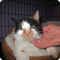 Adopt A Pet :: Honey nose - Coos Bay, OR