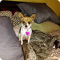 Adopt A Pet :: Charles - San Diego, CA