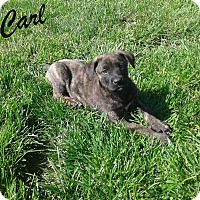 Adopt A Pet :: Carl - Mooresville, IN