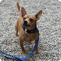 Adopt A Pet :: Cash - Muskegon, MI