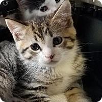 Adopt A Pet :: Elm - Trenton, NJ
