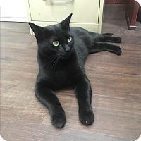Adopt A Pet :: Abby - Nashville, TN