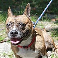 Adopt A Pet :: Bubbles - Boca Raton, FL