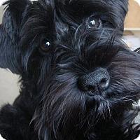 Adopt A Pet :: Luigi(in adoption process) - El Cajon, CA