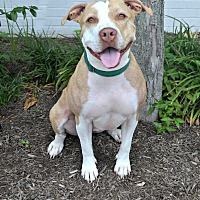 Mixed Breed (Medium) Mix Dog for adoption in Cranford, New Jersey - Penny