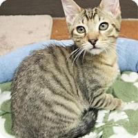 Adopt A Pet :: Steeds - Benbrook, TX