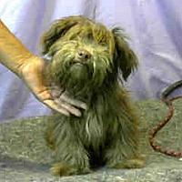 Adopt A Pet :: URGENT 8/21 @ DEVORE - San Bernardino, CA