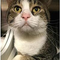 Adopt A Pet :: Moody - Herndon, VA