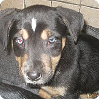 Adopt A Pet :: Othello (ADOPTED!) - Chicago, IL