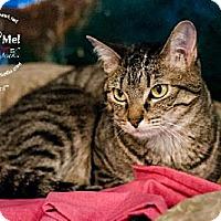 Adopt A Pet :: Juliet (& Romeo Bonded Pair) - Lakewood, CO