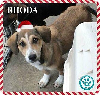 Shepherd (Unknown Type)/Hound (Unknown Type) Mix Puppy for adoption in Kimberton, Pennsylvania - Rhoda