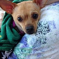 Adopt A Pet :: Peanut/TN - Columbia, TN