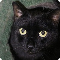 Adopt A Pet :: Be-Bop and Moses - Columbia, MD