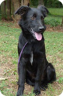 Labrador Retriever/Retriever (Unknown Type) Mix Dog for adoption in Hartford, Connecticut - Pal