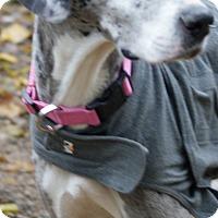 Adopt A Pet :: Lyric - Baden, PA