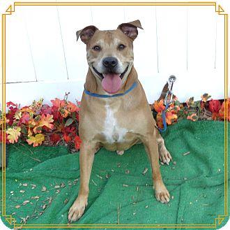 Boxer Mix Dog for adoption in Marietta, Georgia - GORDY see also CRISSY
