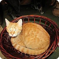 Adopt A Pet :: Peaches - DeRidder, LA
