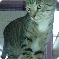 Adopt A Pet :: Toby - Whittier, CA