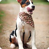 Adopt A Pet :: Benny - Fayetteville, GA
