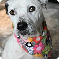 Adopt A Pet :: Pierce - Gulfport, MS