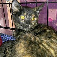 Adopt A Pet :: Princess Fiona - Dallas, TX