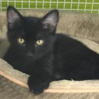 Adopt A Pet :: Oliver - Whiting, IN