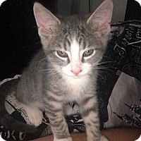 Adopt A Pet :: Louie - Palatine, IL