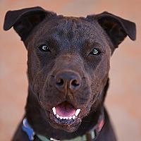 Adopt A Pet :: Queenie - Kanab, UT