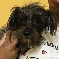 Adopt A Pet :: 17-09-2929 Fancy - Dallas, GA