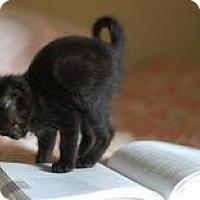 Adopt A Pet :: Petey - Columbus, GA