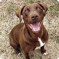 Adopt A Pet :: Shelby Lynn - Fort Riley, KS