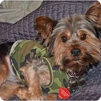 Adopt A Pet :: Leo - Fairfax, VA
