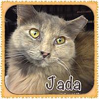Adopt A Pet :: Jada - Bradenton, FL