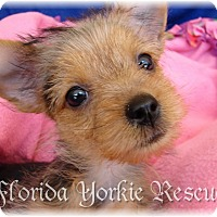 Adopt A Pet :: Daisy - Palm City, FL