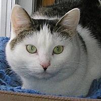 Adopt A Pet :: Demi - Eldora, IA