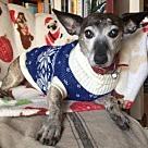 Adopt A Pet :: Bruno