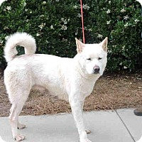 Adopt A Pet :: Dina - Virginia Beach, VA
