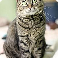 Adopt A Pet :: Gidget - Yukon, OK