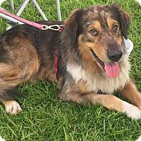Adopt A Pet :: John Wayne - Savannah, GA