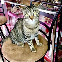 Adopt A Pet :: Lilly - Westwood, NJ